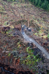 Clearcut in Tlingit Aani. Copyright Helpman Productions